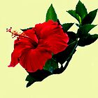 Red Hibiscus on Yellow by Memaa