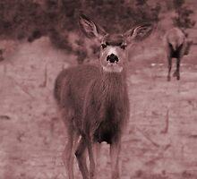 deer by TAMARA MORAN