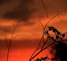 Templestowe sunsets by Rosina  Lamberti