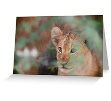 Cub's Safe Place Greeting Card