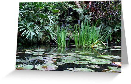 Reflecting Pond by Daniel J. McCauley IV