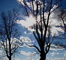 Crackled Trees by linda lowry