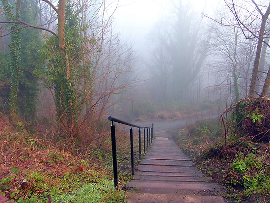 Steps in the Fog by Tom Gomez
