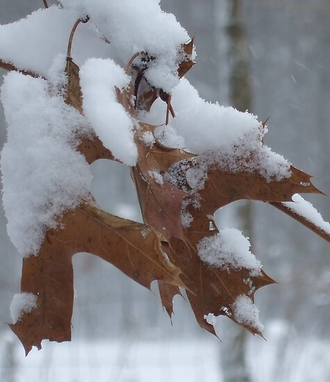 Oak Leaf by SaMack