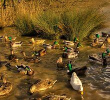 Feeding Time.... by Dave Warren