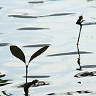 "ART by bec ""Mangrove Seedling "" by ARTbybec"