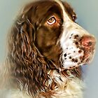 Ever Watchful: English Springer Spaniel by wallarooimages