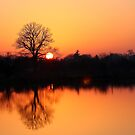 Sunset orange by jdmphotography