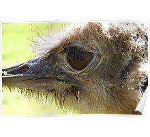 The Eye of Emu - NZ - Invercargill - Southland Poster