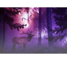 The Enchanted Forest'... Photographic Print