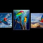 The Beauty of Macaws by Tarrby