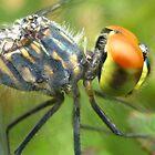 orange eyes by Belinda Cottee