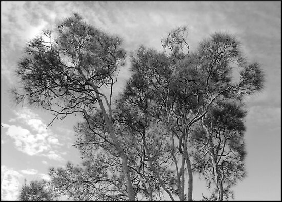 tracery of trees by adam pearson