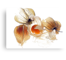 Physallis Canvas Print