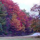 A Fall Drive by Julié Pearce