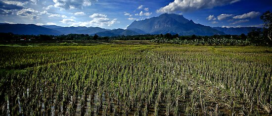 Chiang Mai   Chiang Dow   Thailand by hangingpixels