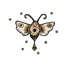 Moth by Anita Inverarity