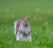 Excuse me, do you have any nuts? by Beverley Goodwin