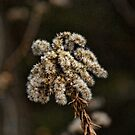 A Winters Bloom by Rick  Friedle