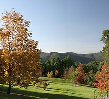 Autumn In Mt. Tomah Botanic Garden Blue Mountains NSW Australia by MiImages