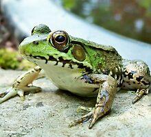 sillyfrog by sillyfrog