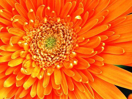 orange radiance by Lenny La Rue, IPA