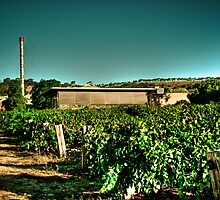 Penfold Winery - V2 by Jonathan Yeo