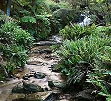 Leura Cascades in The Blue Montains by Ben Shaw