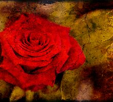 Vintage Rose by RedGiraffe