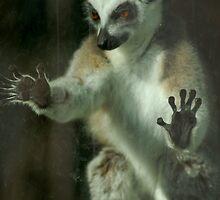 Lemur Lockdown by ApeArt