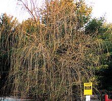 Dead Willow by Lyndsay81