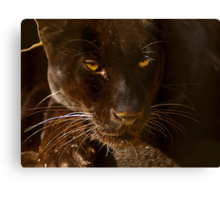 Obsidian Silk - Black Leopard Canvas Print