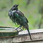 It can be a hard life being a bird........! by Roy  Massicks