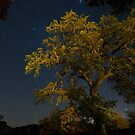 Live Oak & Starry Night by A.M. Ruttle