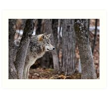 Timber Wolf in trees Art Print