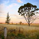 As evening descends ~ Riverina NSW by Rosalie Dale