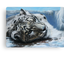 Snow Leopard on top of the world. Canvas Print
