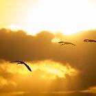 Into the Sun by Jennie Gardiner