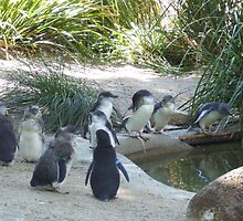 Penguins by DaveM