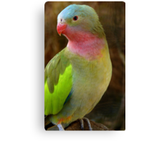 Do you like my Pastel Outfit! - Princess Parrot - NZ - Southland Canvas Print