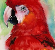 Scarlet Macaw by IsabelSalvador