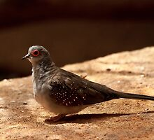 Bird with a red eye by DavidsArt