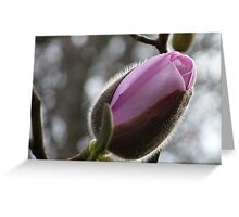Ready to reveal her hidden beauty! - Magnolia - NZ Greeting Card