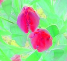 Yet to Open Red Tulip Duo by Mike Solomonson