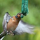 Hang on in there.....you'll get a feed.......! by Roy  Massicks