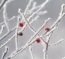 frozen berries by Janet Gosselin