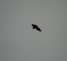 Bat silhoutted against the evening sky 8 by SheriarIrani
