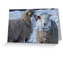 We got Hats & Scarves to match the Snow! - Sheep - NZ - Southland Greeting Card