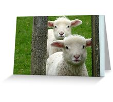 Do we look like Twins! - Lamb - NZ - Southland Greeting Card