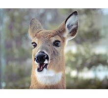 Faces of Deer Series #3 Photographic Print